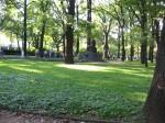 Trees in Łazienki Królewskie.