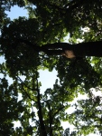 More Łazienki Królewskie trees.