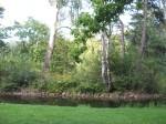Lake, trees.